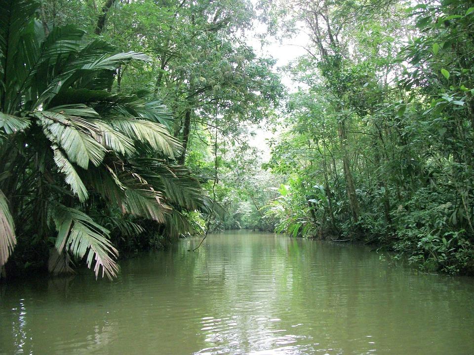 Stream, River, Nature, Outdoor, Summer, Rocky, Scenic