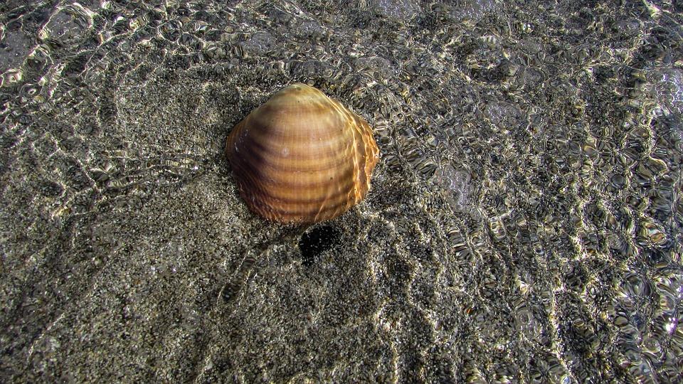 Shell, Beach, Sea, Sand, Summer, Water, Reflection