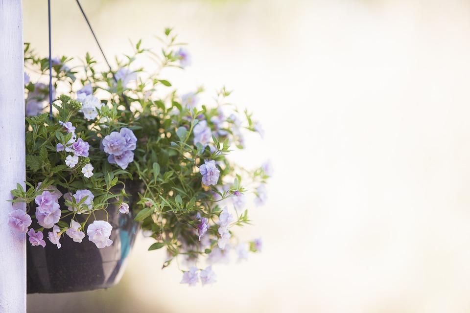 Plant, Nature, Sheet, Summer, Hanging Plant, Garden