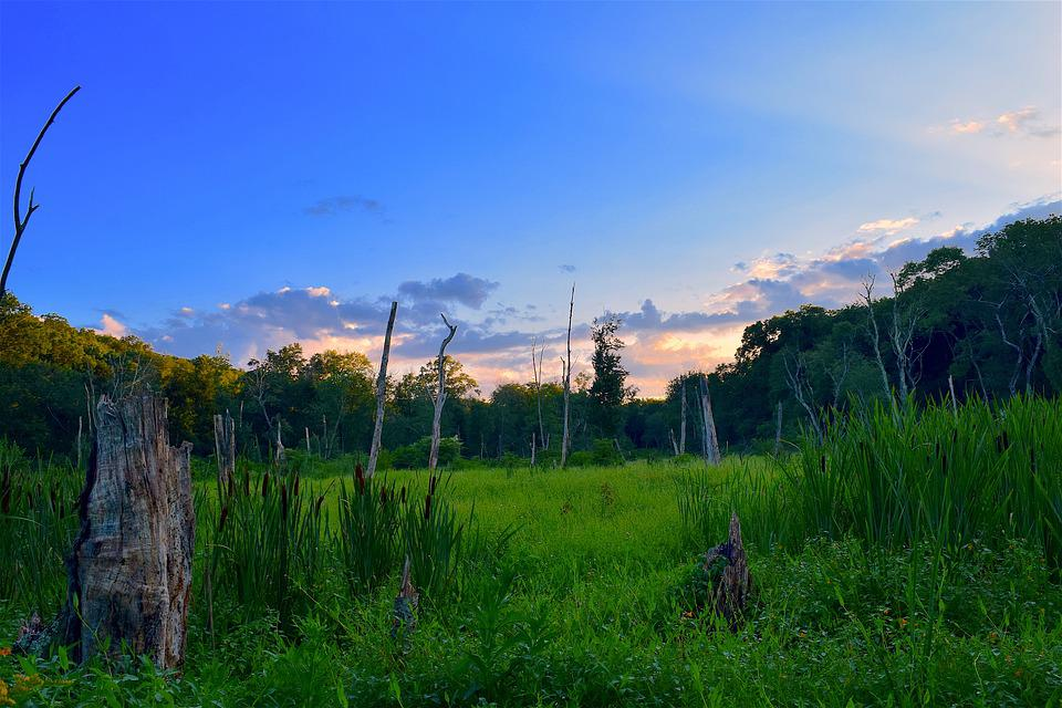 Field, Sunset, Trees, Summer, Nature, Landscape, Sky