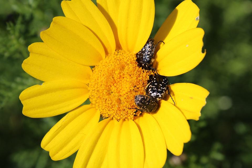 Yellow Flower, Small Bugs, Flower, Nature, Summer