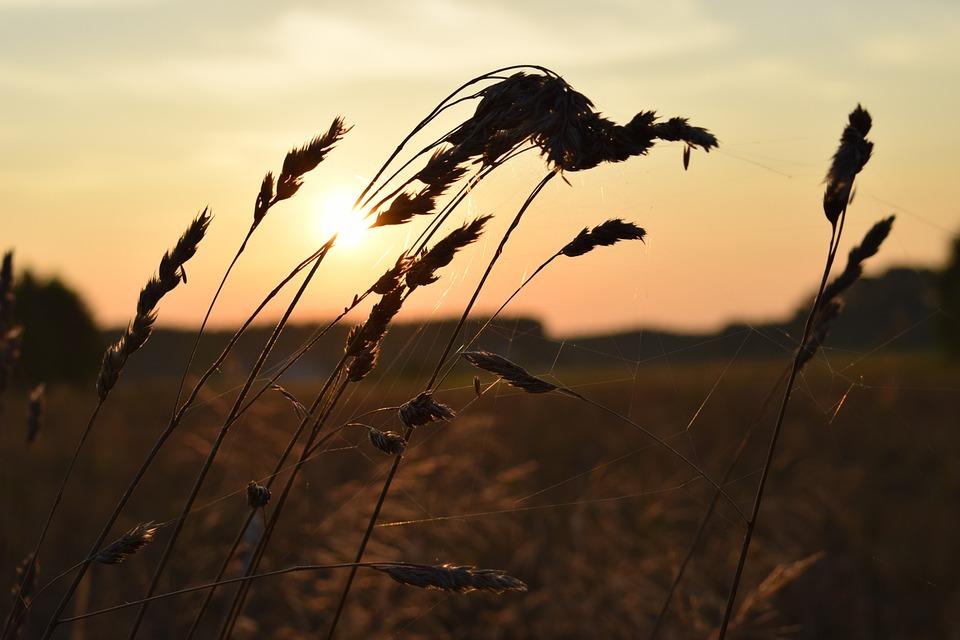 Summer, Meadow, Field, Grass, Green, Nature, Spacer