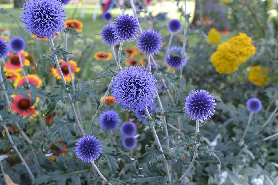 Summer, Flowers, Purple, Nature, Spring, Blossom, Bloom