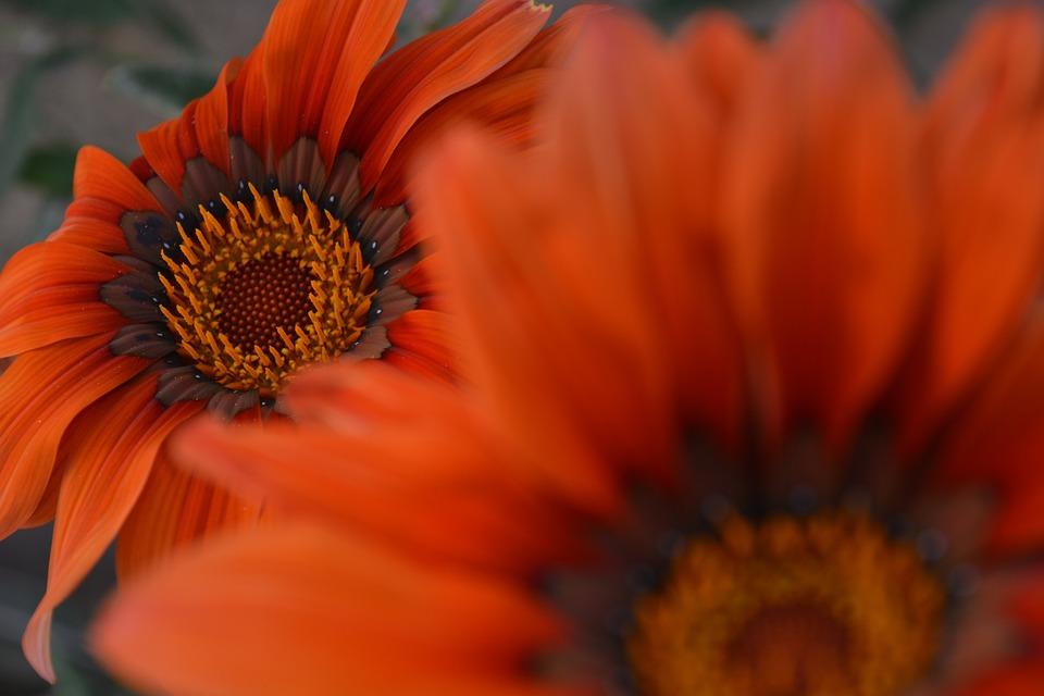Orange, Spring, Garden, Flowers, Summer, Plant, Yellow