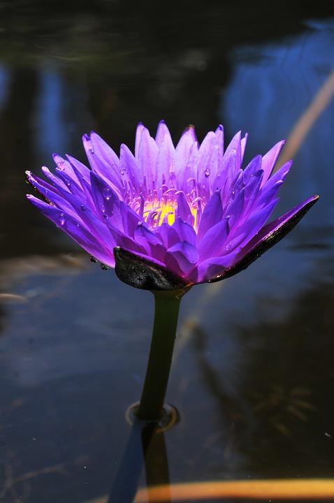 Flower, Plants, Plant, Nature, Spring, Garden, Summer