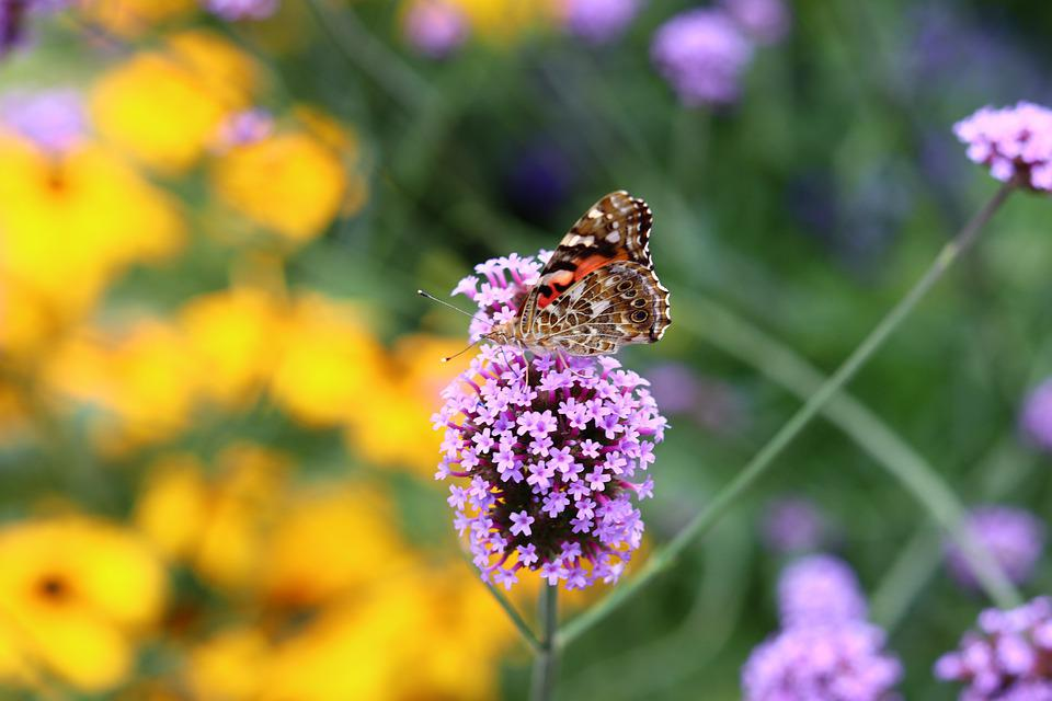 Butterfly, Summer, Spring, Nature, Insect, Animal