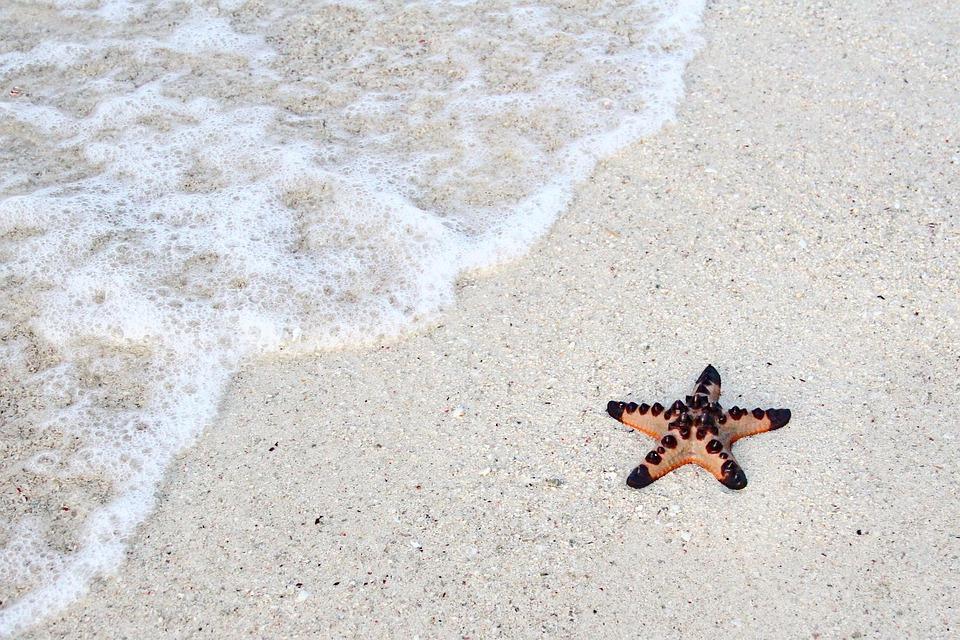 Beach, Starfish, Summer, Sea, Shell, Sand, Nature