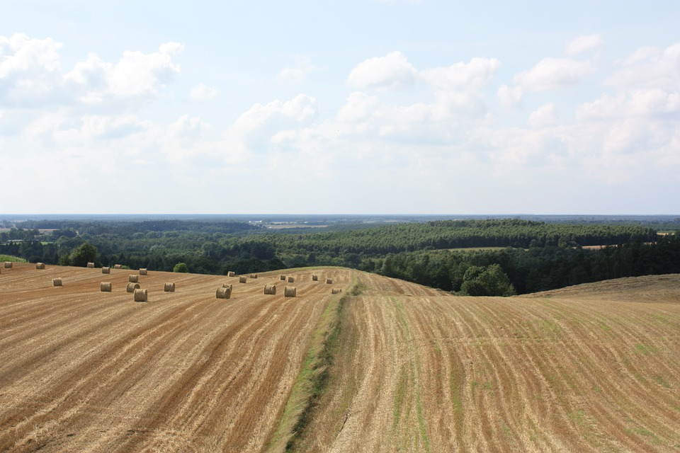 Field, Landscape, Cereals, Forest, Summer, Straw