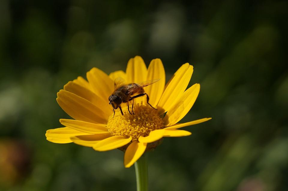 Flower, Hoverfly, Yellow, Summer, Summer Flower, Close