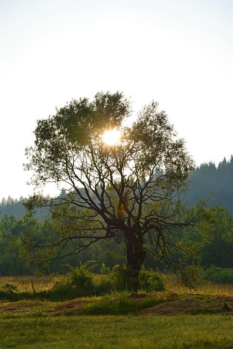 Tree, Sun, Sunset, Sky, Mood, Summer, Nature, Sunlight