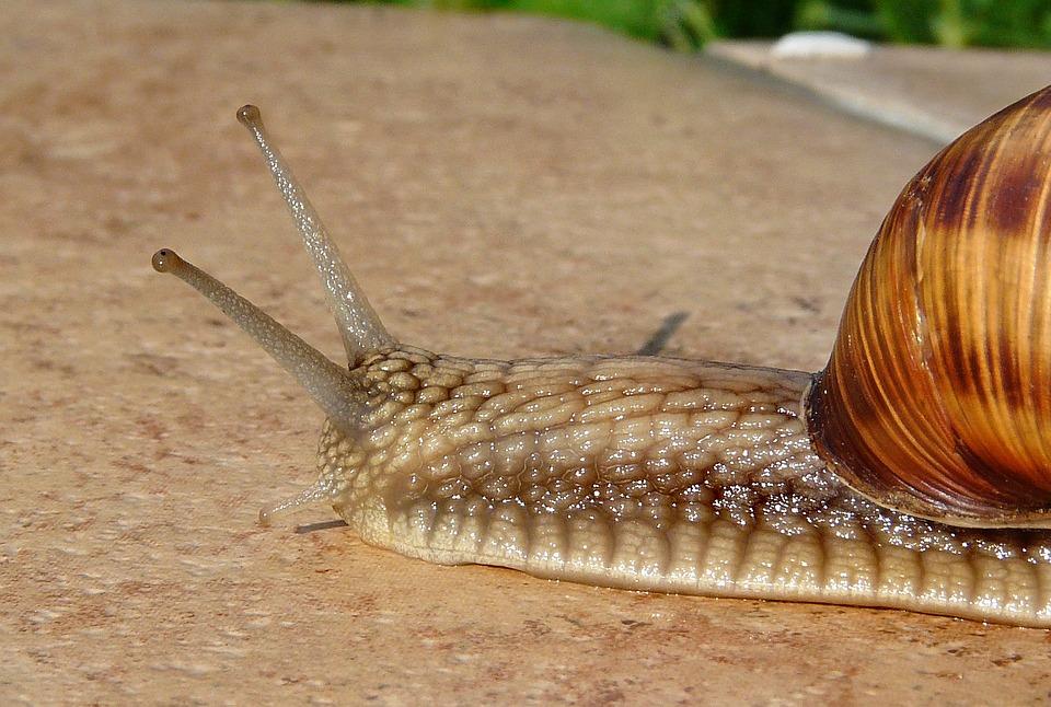Snail, Seashell, Antennae, Terrace, Summer, The Sun