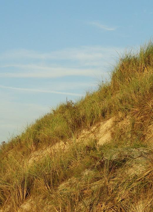 The Sand Dunes, The Baltic Sea, Sea, Grass, Summer