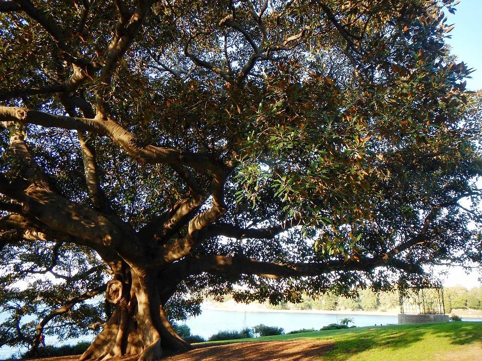 Tree, Green, Leaves, Summer