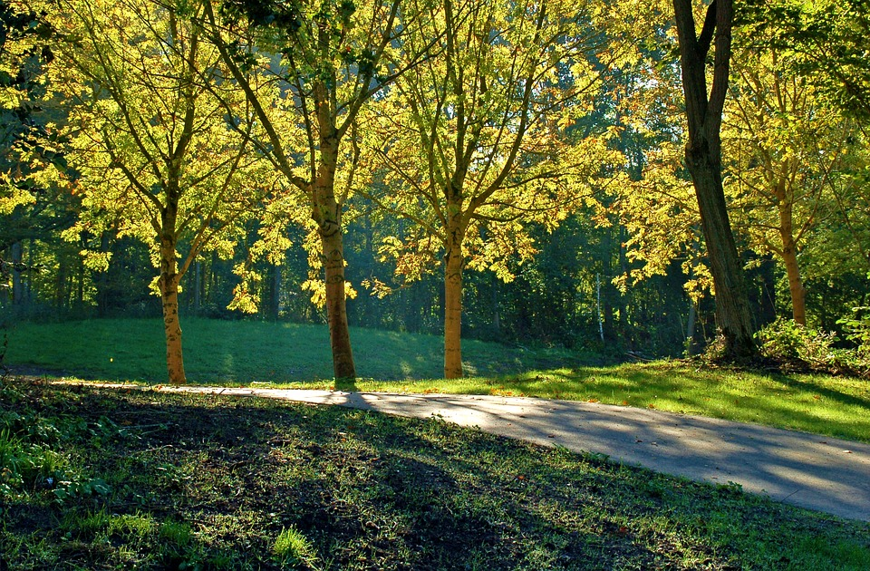 Summer, Trees, Sun, Leaves, Shadow, Branches