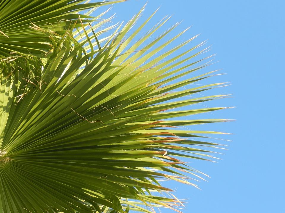 Palm, Green, Leaf, Summer, Tropical, Sky