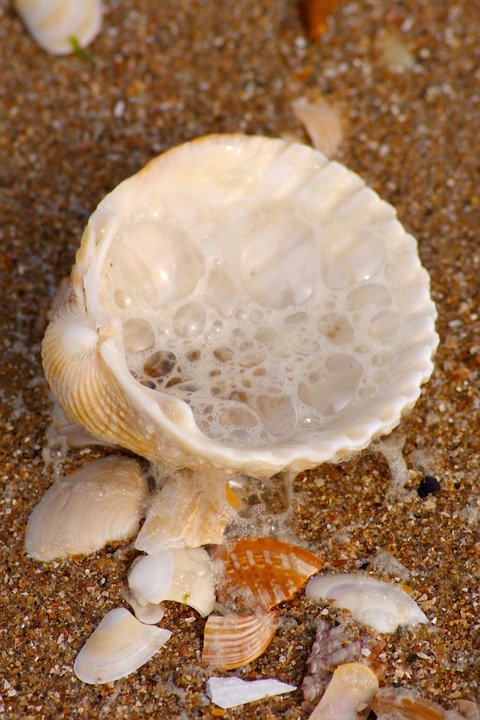 Shell, Wave, Holiday, Beach, Summer, Sun, Water, Waters