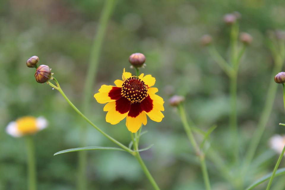 Nature, Summer, Plants, Flowers, Wild, Outdoors, Floral