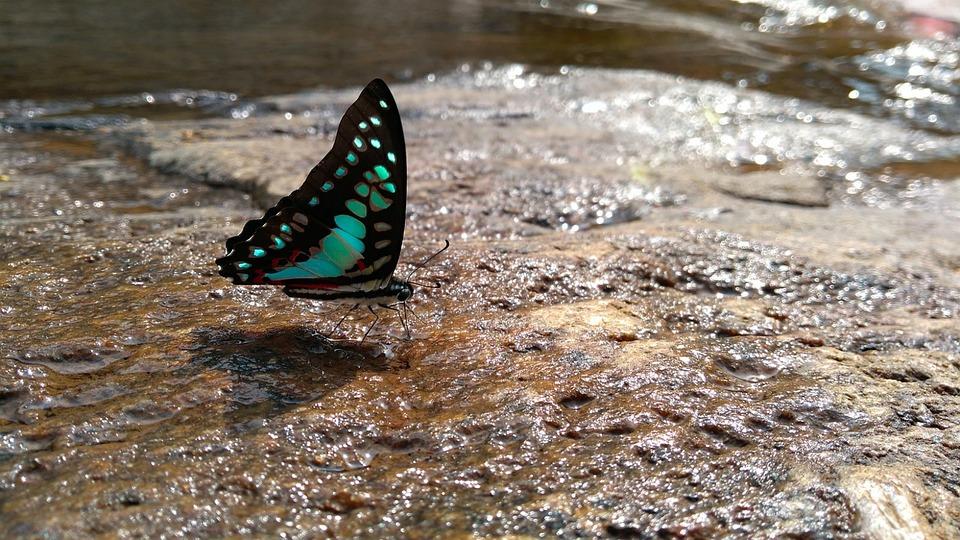 Nature, Outdoors, Summer, Water, Wildlife