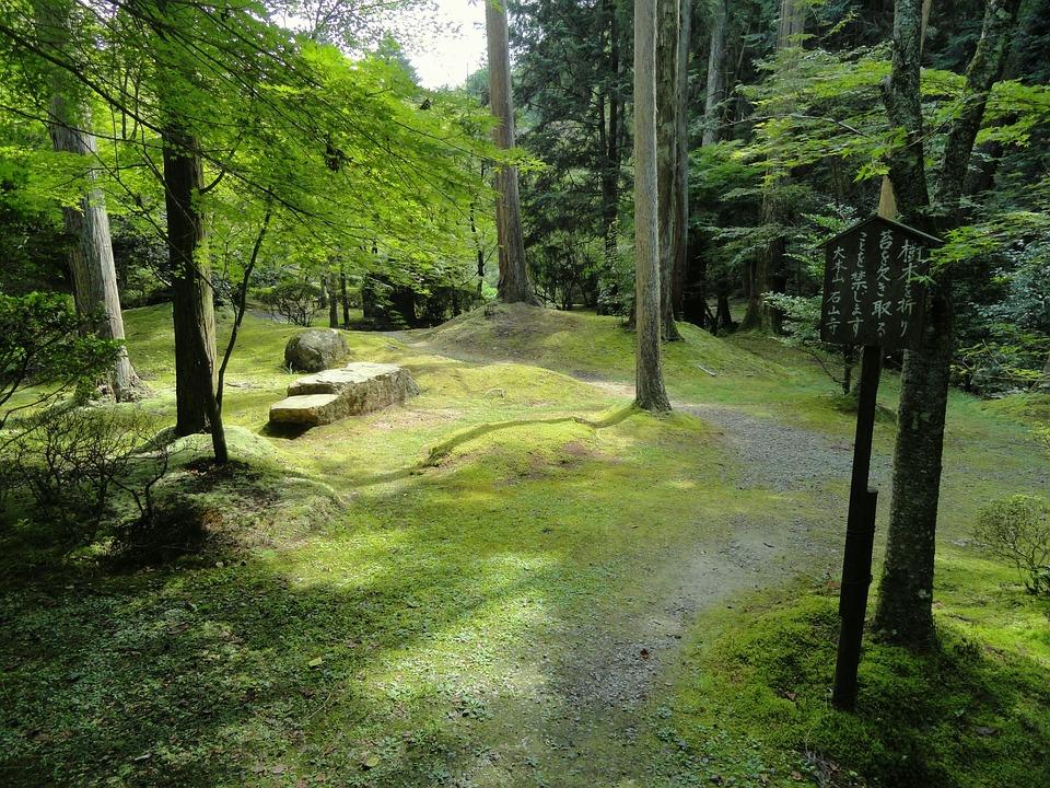 Japan, Landscape, Forest, Trees, Woods, Scenic, Summer
