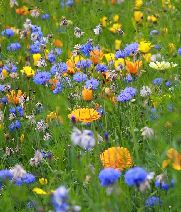 Flower, Meadow, Yellow, White, Grass, Field, Summer