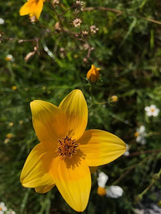 Flower, Nature, Plant, Summer, Garden, Yellow
