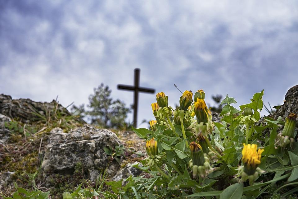 Hiking, Dandelion, Rock, Cross, Summit, Summit Cross