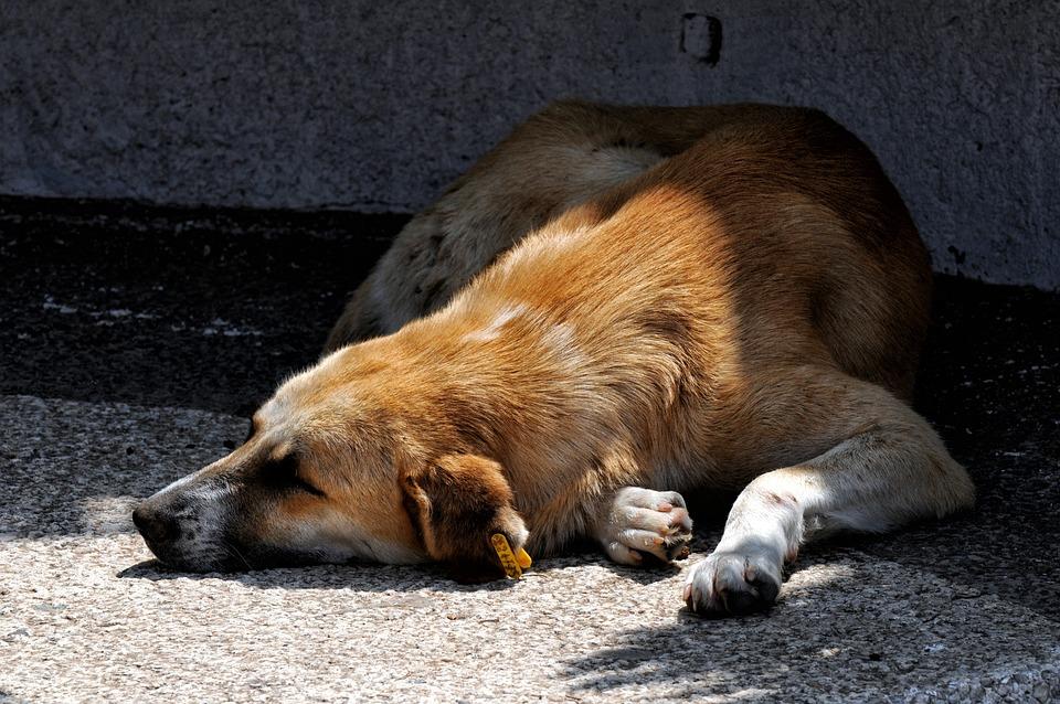 Dog, Rest, Nap, Sun, Animal