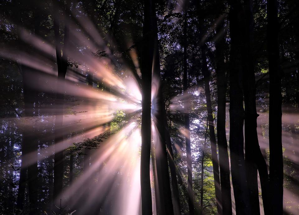 Forest, Sunlight, Sun Beams, Light, Silhouettes