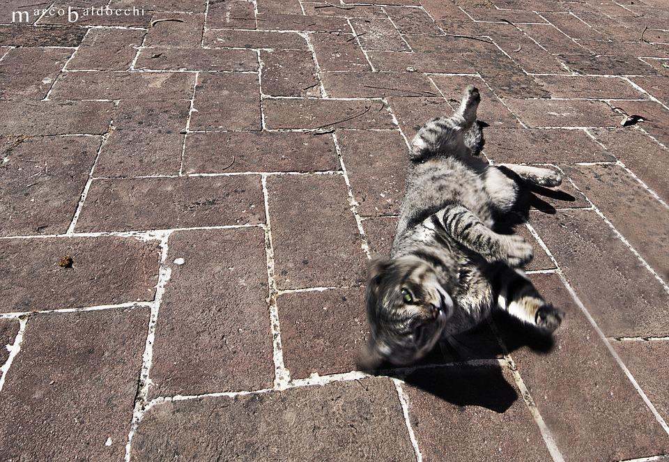 Cat, Sun, Feline