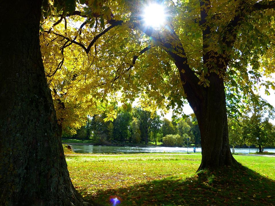 Autumn, Mood, Danube, Autumn Light, Sun, Golden