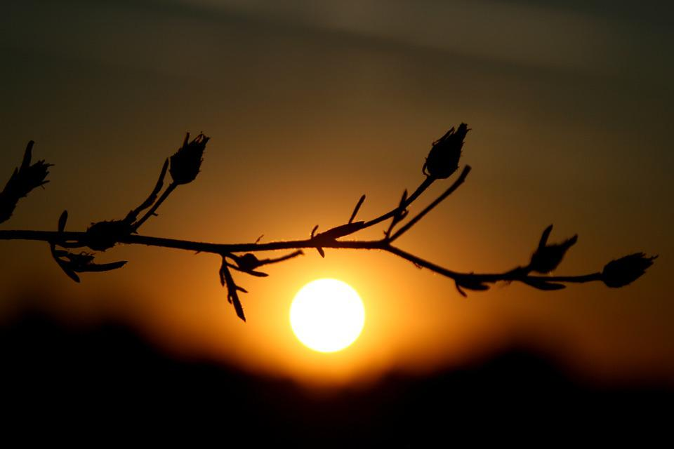 East, Flowers, Shadow, Sun