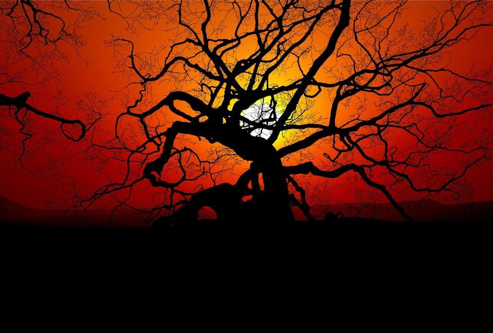 Sunset, Tree, Nature, Sun, Landscape, Evening, Twilight