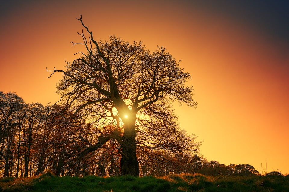 Tree, Kahl, Winter, Evening, Sun, Sunset, Silhouette