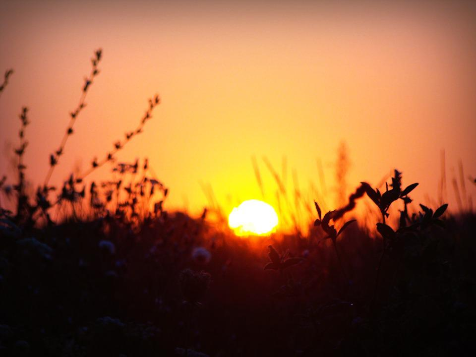 Dawn, Sun, Plants, Steppe, Field, Flowers, Silhouette
