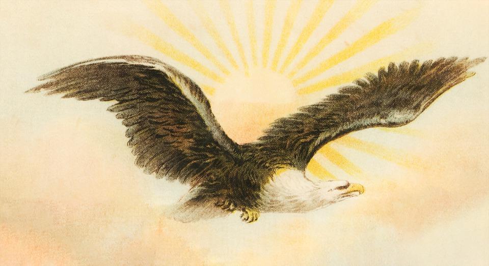 Eagle, Sun, Bird, Flying, Flight, Wings, Freedom