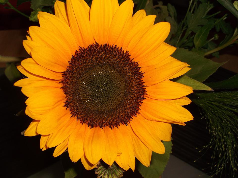 Sun Flower, Yellow, Macro, Summer, Flower