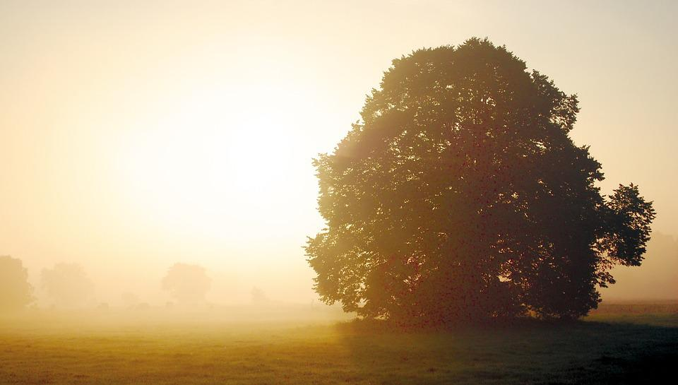 Autumn, Sun, Morning, Fog, Tree, Sunrise, Foggy, Haze