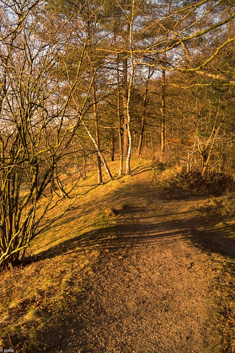Forest Path, Sun, Forest, Nature, Autumn, Mood