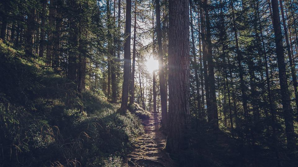 Forest, Nature, Outdoors, Path, Sun, Trees, Woods