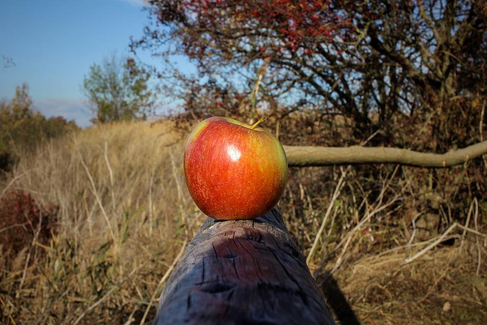 Apple, Close Up, Fruit, Autumn, Out, Railing, Sun