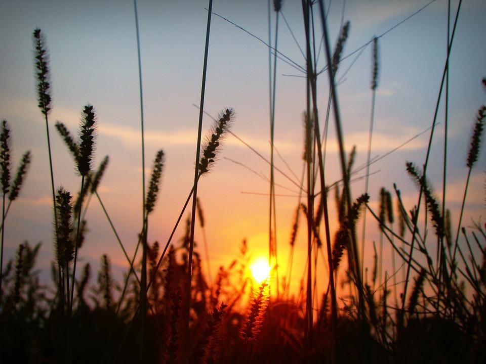 Sunset, Sun, Plants, Silhouette, Grass