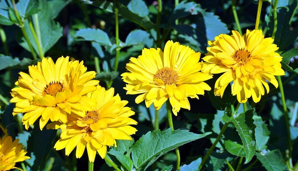 Charming Sun Hat, Yellow, Flower, Bright, Flower Garden, Nature