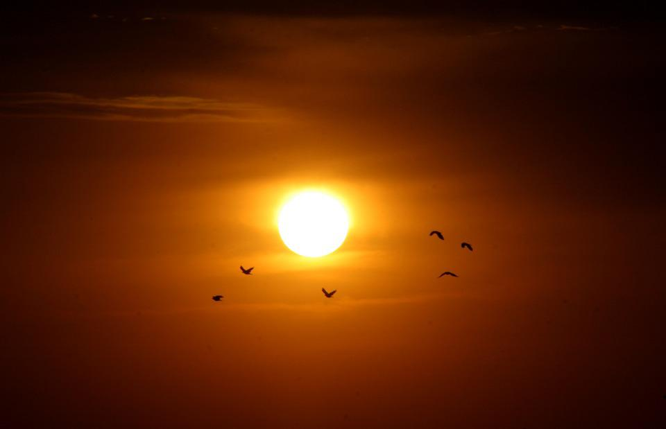 Sunset, Sun, Birds, Red, Fire, Sky, In The Evening