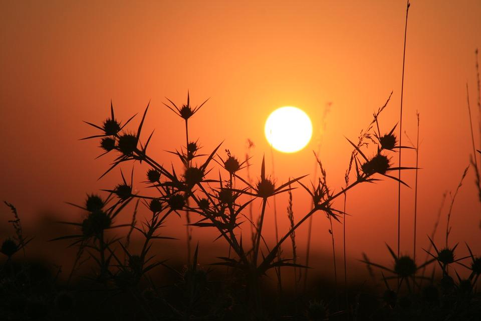 East, Sun, Thorns, Grass, Red, Sky, Landscape