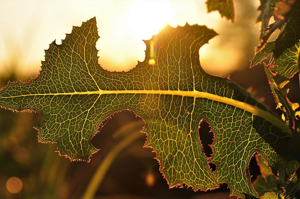 Leaf, Celle, Green, Symmetry, Nature, Sun, Light, Macro