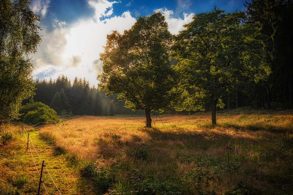 Forest, Trees, Leaves, Grass, Meadow, Sun, Sunlight