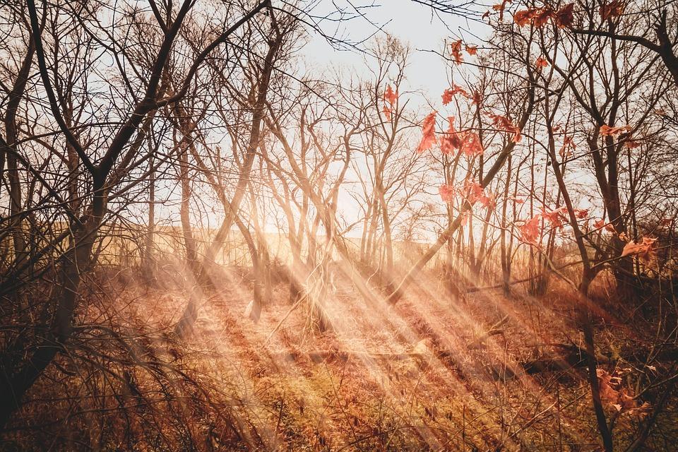 Moor, Rays, Light, Sun, Forest, Landscape, Sunbeam