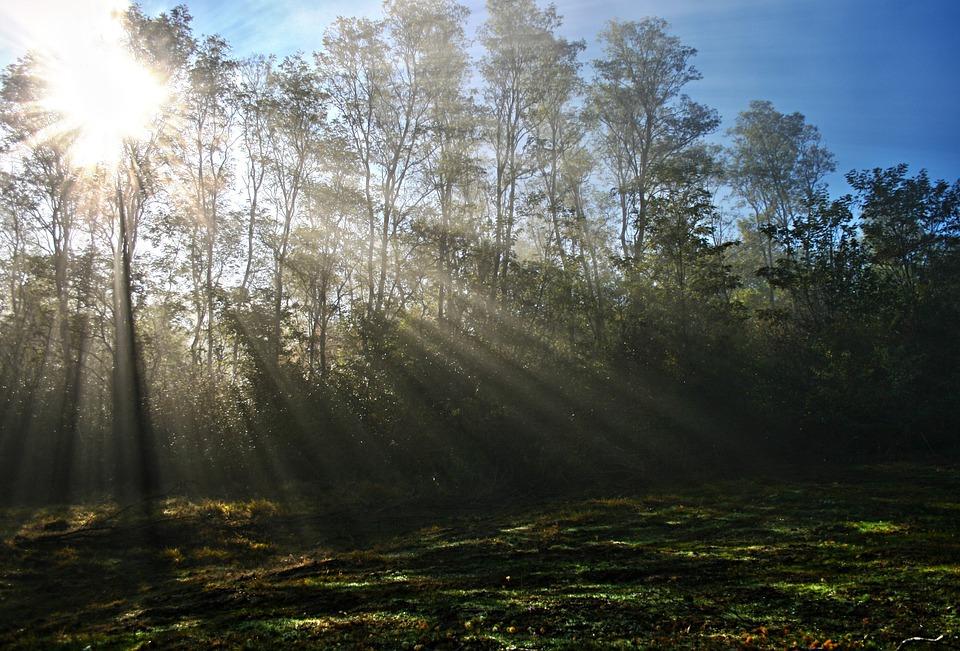 Mist, Sun, Sunbeams, Tree, Fog, Morning, Forest, Nature