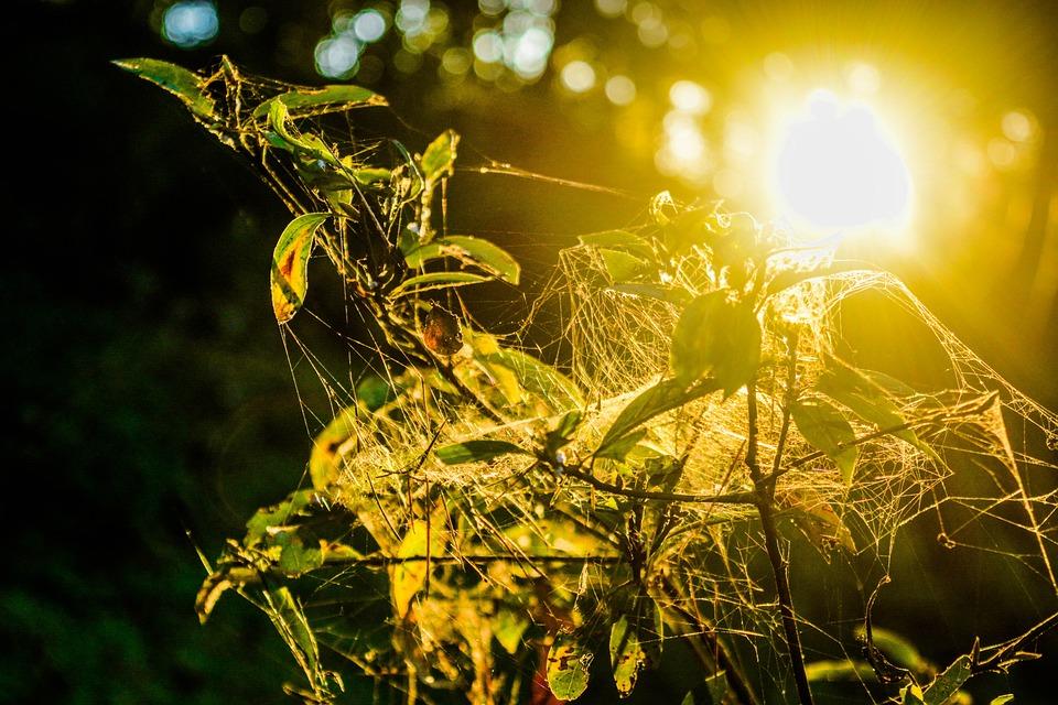 Nature, Sun, Leaf, Summer, Flora, Field, Environment