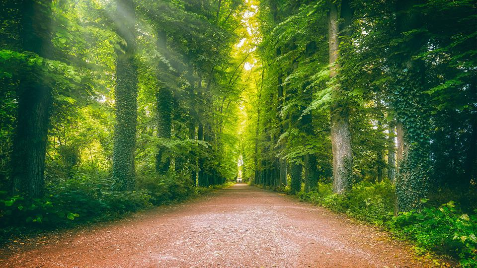 Away, Avenue, Forest, Sun, Rays, Forest Path, Nature